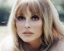 This is an image of Photograph & Poster of Sharon Tate 285122