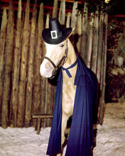 This is an image of Photograph & Poster of Mr.Ed 285254