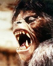 This is an image of Photograph & Poster of American Werewolf in London 295398