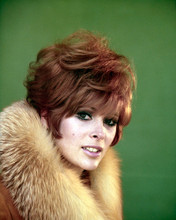 This is an image of Premium Photograph & Poster of Jill St. John 297806