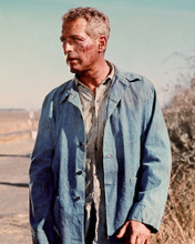 This is an image of Photograph & Poster of Paul Newman 297983