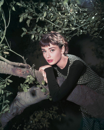 This is an image of Photograph & Poster of Audrey Hepburn 298127