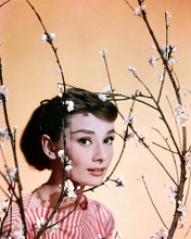 This is an image of Photograph & Poster of Audrey Hepburn 289094