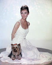 This is an image of Photograph & Poster of Audrey Hepburn 289114