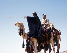 This is an image of Photograph & Poster of Lawrence of Arabia 289855