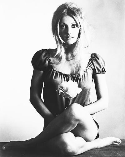 This is an image of 172179 Sharon Tate Photograph & Poster
