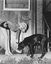 This is an image of 179817 Jayne Mansfield Photograph & Poster