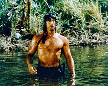 This is an image of 252592 Sylvester Stallone Photograph & Poster