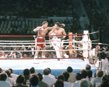 This is an image of 283235 Muhammad Ali and George Foreman Photograph & Poster