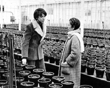 This is an image of 194459 Harold and Maude Photograph & Poster