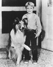 This is an image of 175747 Jon Provost & Lassie Photograph & Poster