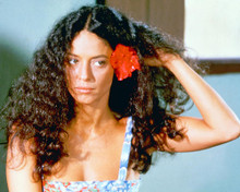 This is an image of 267244 Sonia Braga Photograph & Poster