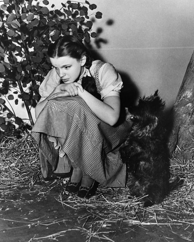 This is an image of Prints & Posters of Judy Garland 104534