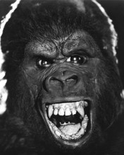 This is an image of Prints & Posters of King Kong (1976) 105013