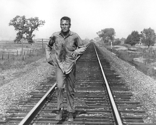 This is an image of Prints & Posters of Cool Hand Luke 105030