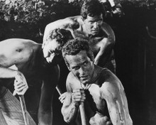This is an image of Prints & Posters of Cool Hand Luke 105035