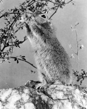 This is an image of Prints & Posters of The Living Desert 106066