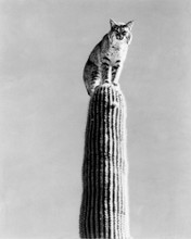 This is an image of Prints & Posters of The Living Desert 106112