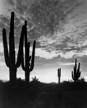 This is an image of Prints & Posters of The Living Desert 106118