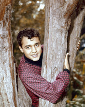 This is an image of Prints & Posters of Sal Mineo 203515