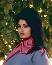 This is an image of Prints & Posters of Sophia Loren 203412