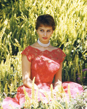 This is an image of Prints & Posters of Sophia Loren 203910
