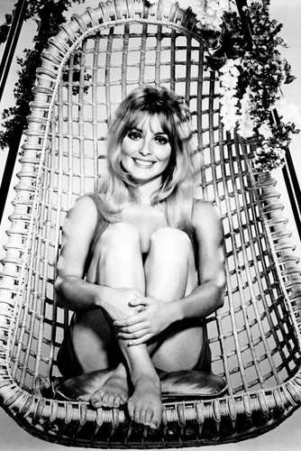 This is an image of Prints & Posters of Sharon Tate 106990