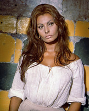 This is an image of Prints & Posters of Sophia Loren 204332