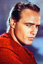 Marlon Brando vintage 4x6 inch real photo #346638