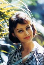 Sophia Loren, beautiful pose by palm tree 4x6 photo