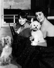 Leslie Caron Elizabeth Taylor 1950's pose with their dogs 12x18  Poster