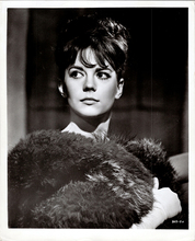 Natalie Wood beautiful original 8x10 real photograph in fur Gypsy 1962 portrait