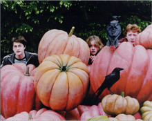 Harry Potter 8x10 photo Daniel Radcliffe Emma Watson Rupert Grint giant veggies
