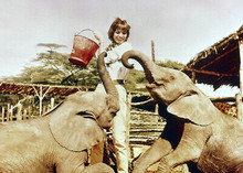 Hatari 1962 movie Elsa Martinelli feeds baby elephants 5x7 inch press photo