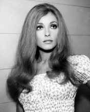 Sharon Tate lovely smiling portrait in summer style dress 8x10 photo