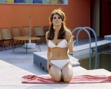 Raquel Welch relaxes pool side in white bikini 8x10 inch photo