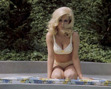 Stella Stevens busty 8x10 inch photo in yellow bikini sat beside pool mid 1960's
