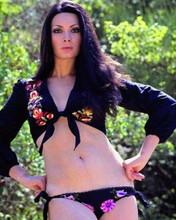 Edwige Fenech pin-up pose in bikini bottoms and shirt top 8x10 inch photo