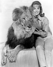 Daktari TV series Cheryl Miller as Paula Tracy with Clarence the Lion 8x10 photo