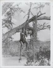 Jock Mahoney swings on vine as Tarzan original 8x10 photo movie unidentified