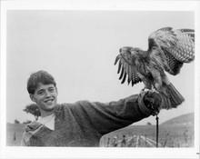Ladyhawke original 8x10 inch photo Matthew Broderick with hawk on hand