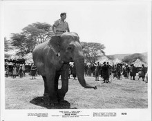Mister Moses 1965 original 8x10 inch photo Robert mitchum on elephant