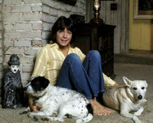 David Cassidy The Partridge Family seated pose with dogs 8x10 inch photo