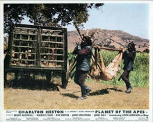 Planet of the Apes 1968 two gorillas carry Charlton Heston tied up 8x10 photo