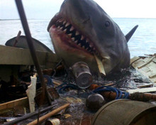 This is an image of Photograph & Poster of Jaws 298569