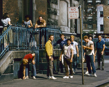 This is an image of Prints & Posters of West Side Story 299336