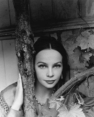 This is an image of Prints & Posters of Leslie Caron 104070