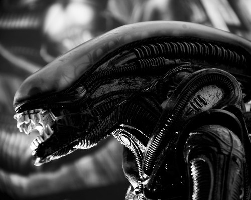 This is an image of Prints & Posters of Alien: Covenant 104078