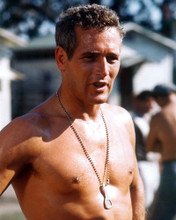 This is an image of Prints & Posters of Paul Newman 201725