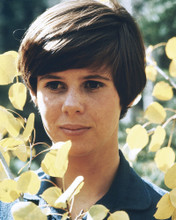 This is an image of Prints & Posters of Kim Darby 202291